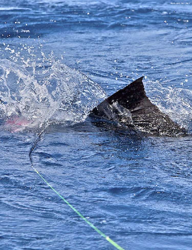 Feature: Fly Fishing for Sailfish Made Easy