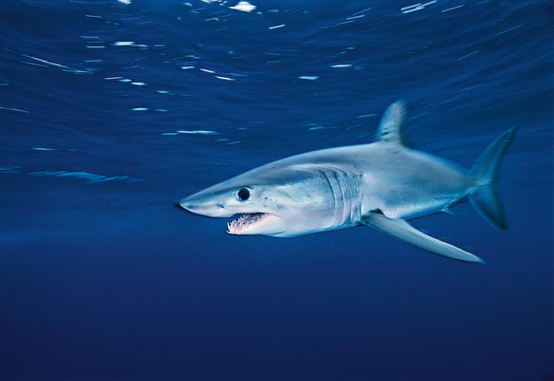 Conservation: Saving sharks from finning