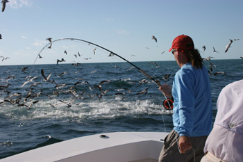 Tips & Tactics: Why am I not catching fish?