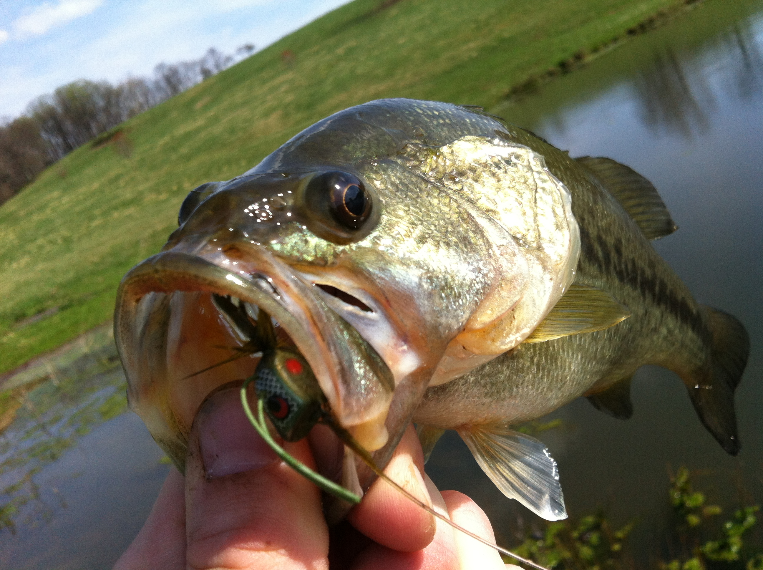 """Feature: Backyard Big Mouths, """"best day for us mans ever"""""""