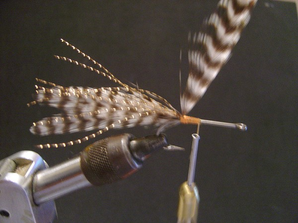 Step two: Tie in a large grizzly hackle in front of the tail section and palmer toward the eye of the hook. Tip > Make sure as you palmer the hackles, grab the feather and pull back during each turn so the quills face back towards the tail.