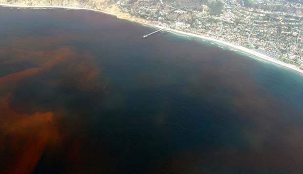 Environment: Red tide persists along SW coast of Florida