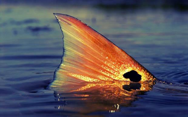 Redfish Fly Life Magazine