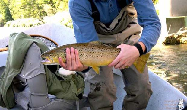 news america s top 10 fly fishing states fly life magazine