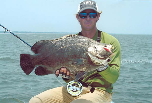 tips tactics about the wily and tasty tripletail fly On triple tail fish