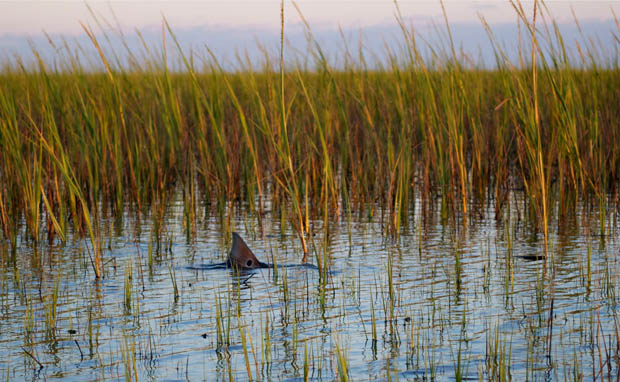 Destinations: Redfish hot spots from Texas to Virginia