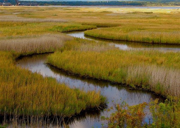 News: Habitat restoration yields long-term benefits to fisheries