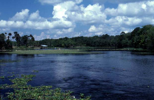 The St, hohns River is 310 miles long, three miles wide at widest point and drops 30-feet from headwaters to mouth. It is one of Florida's major wetlands with a drainage basin of 8,840 square miles.