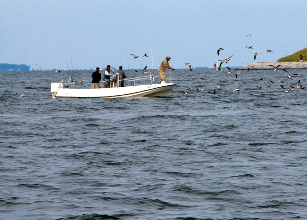 News: Marine recreational fishing's $ impact rivals commercial sector