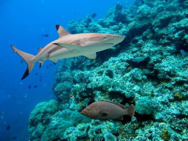 Science: Major changes needed for coral reef survival