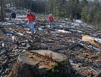 New England clear cutting destroyed stream at top of picture.