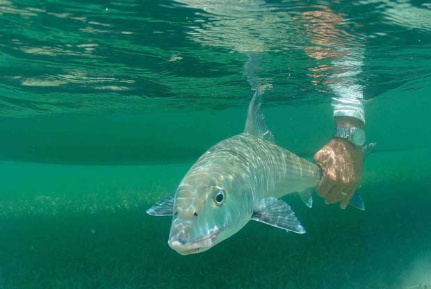 Tips & Tactics: Top bonefish flies for anywhere in the world