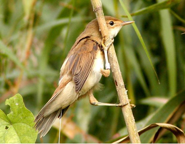 Bet You Didn't Know: Beak-to-brain nerve navigates birds