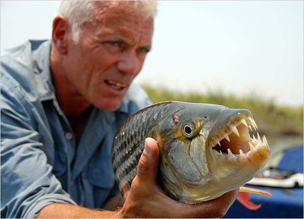Wednesday Fish Facts: The inner ear and lateral line