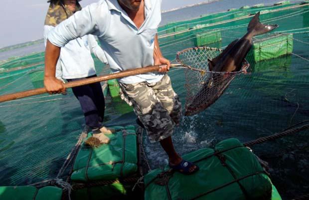 News: Baltimore researchers turn carnivorous fish into vegetarians