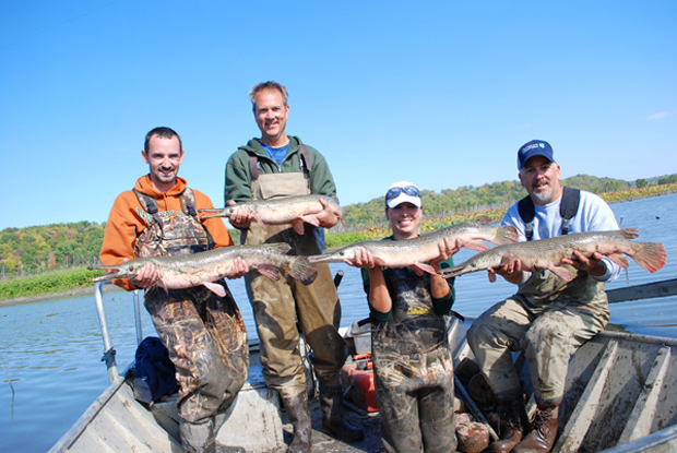 Conservation: They're back big time – alligator gar
