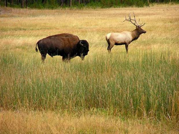 Industry News: Mark your calendar – IFFF in Montana