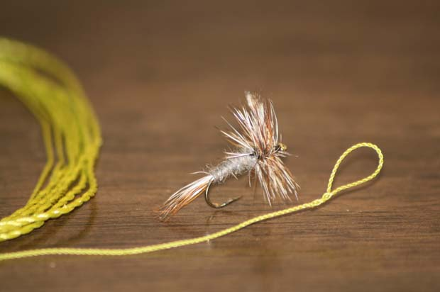 Wednesday Fish Facts: Fluorocarbon versus Monofilament