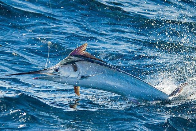 Friday Fish Frame: Kelly Dalling Fallon