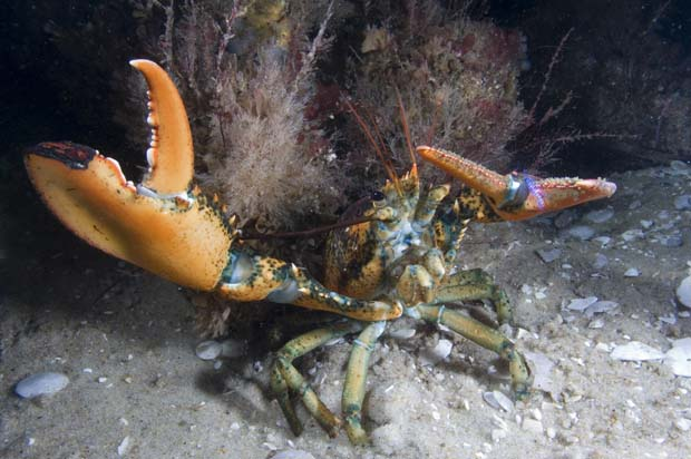 News: Marine Species Distribution Shifts Reflect Local Climate Conditions