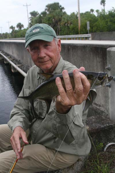 "Author gets a shot at a :flts Bridge"" nursery size tarpon. Steve landed one that was about 10-pounds, the biggest of the day."