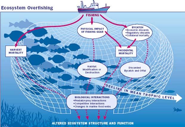 News: Sportsmen uniting in senate plea to fix federal fisheries law