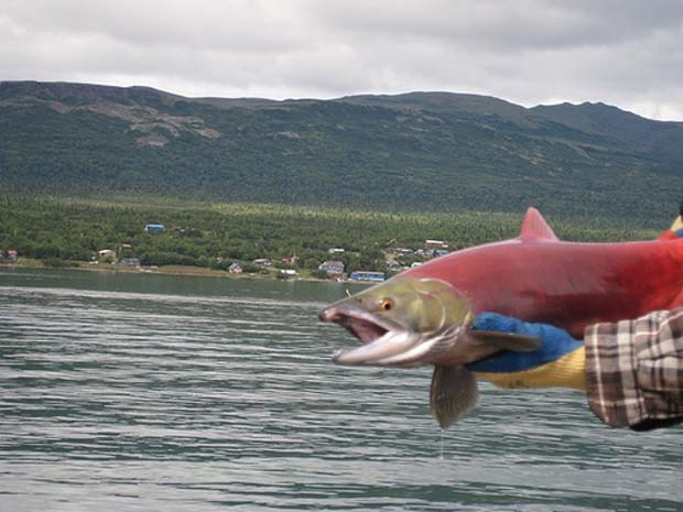 News: Environmental Protection Agency's final report on Bristol Bay