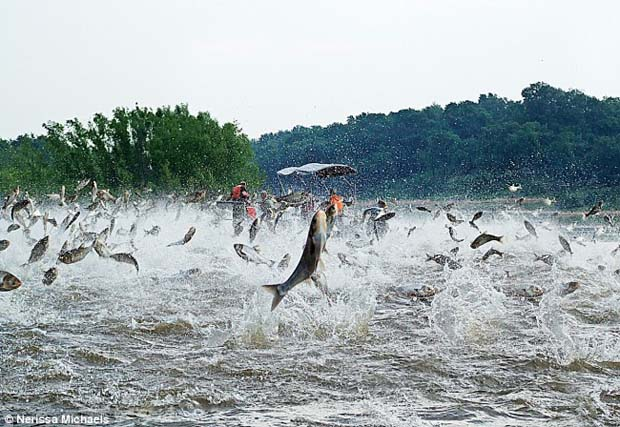 Of Interest: Invasive carp issue jumps to a new level