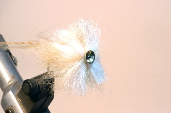 13.) Tie in the dubbing tightly just behind the disc so it sits firm. Tie off with a couple of whipfinish knots.