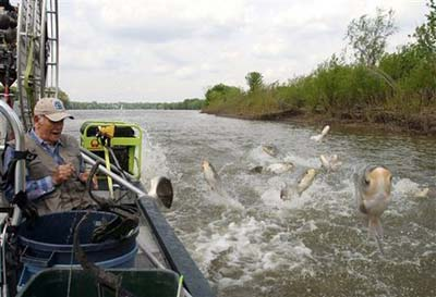 Asian Carp own the Illinois River. Photo by Jim Kirby.