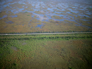 Aerial view of the Tamiami Trail, which inhibits natural water flow in the Everglades. (Credit: Lori Oberhofer, Everglades National Park)