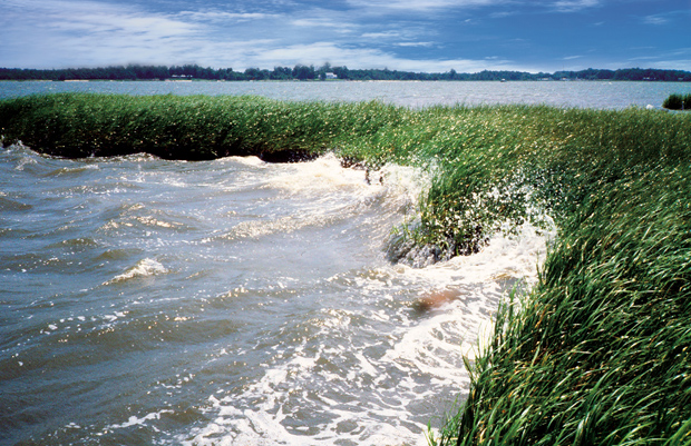 Rehoboth Bay, Rehoboth, Delaware - a marsh at work protecting land from erosion. NOAA photo.