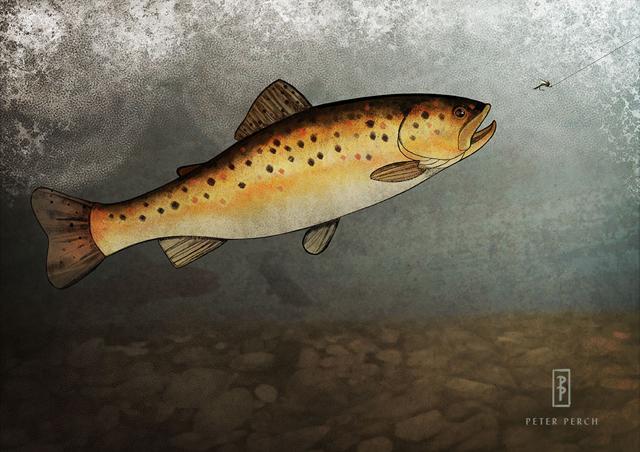 Friday Fish Frame: Peter Perch, heartfelt illustrations