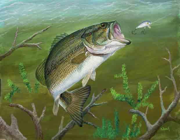 friday fish frame meet artist duane raver � fly life magazine