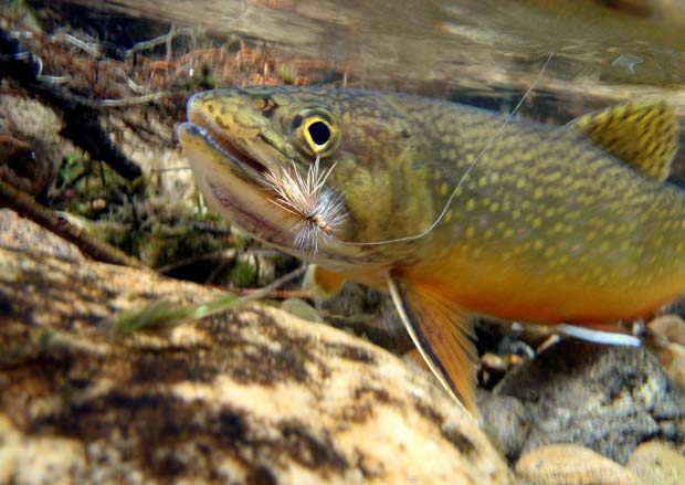 News: TU names new Freshwater Fishing Hall of Famer