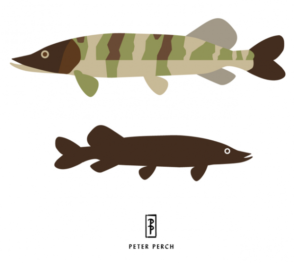 Northern Pike Graphic