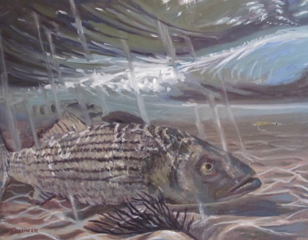 """Bass in the Surf 14"""" x 11"""" Oil on Canvas"""
