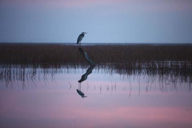 Sea Island Marsh. About 379,000 acres of salt marshes cover Georgia's shoreline, providing habitat for fish, migratory birds and other wildlife. Photo credit Joe Rada / Sea Island Life Magazine.
