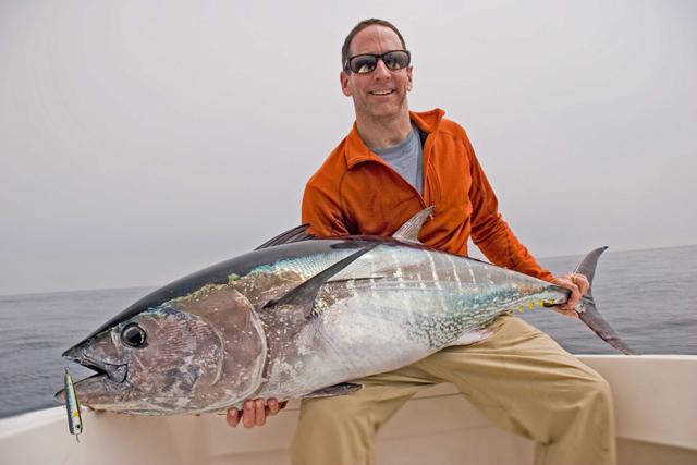 Wednesday Fish Facts: Thunnus thynnus, bluefin tuna