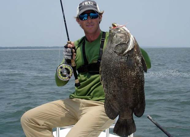 Wednesday fish facts most underated gamefish the for Triple tail fish