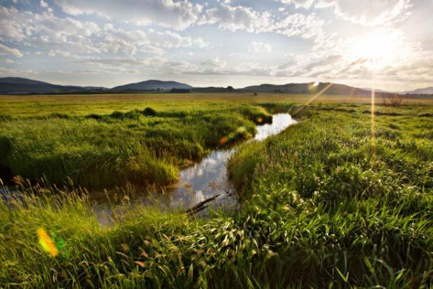 Conservation: Fish and Wildlife programs are eonomic stimuli
