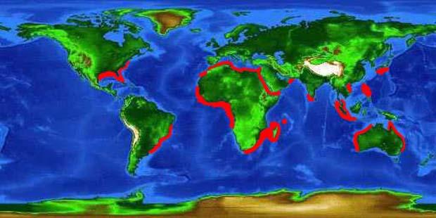 World distribution base for spinner sharks.I cthyology Department Florida Museum of Natural History