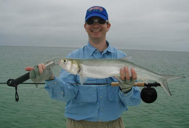 Wednesday Fish Facts: Elops saurus – ladyfish on 6-weight