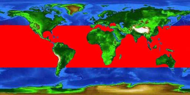 World distribution map for the little tunny.