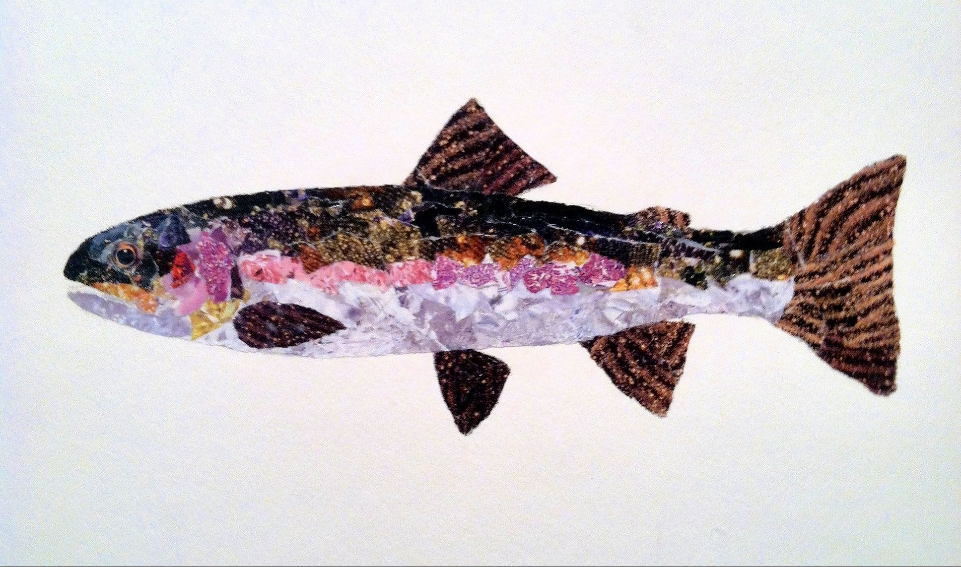 Friday fish frame trout collages by rachel finn fly for Fish photo frame