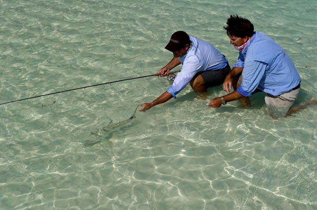 News: BTT announces Genetics programs for Bonefish and Tarpon