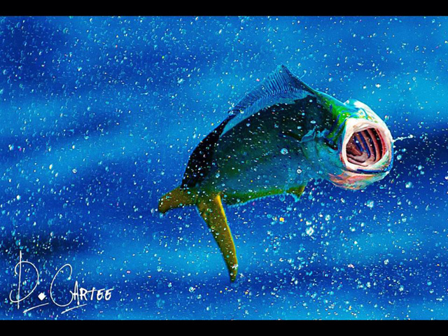 Fish facts is the dolphinfish the perfect game fish for Is a dolphin a fish