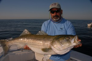 A large female striped bass. Photo by McMurray.