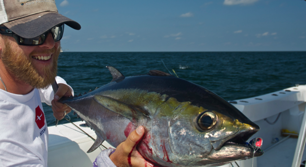 Fish Facts: Thunnus, atlanticus. The blackfin tuna is a warrior