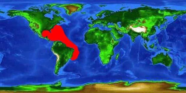 World distribution map for the blackfin tuna.